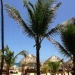 excellence punta cana beach view palm tree