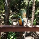 parrot excellence punta cana