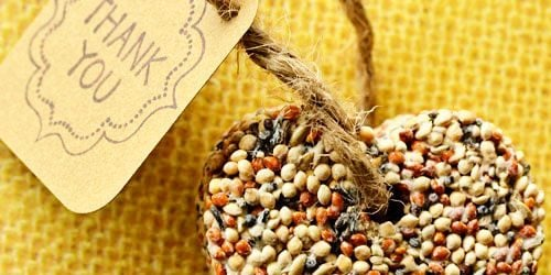 Birdseed Wedding or Party Favors - DIY Craft Idea