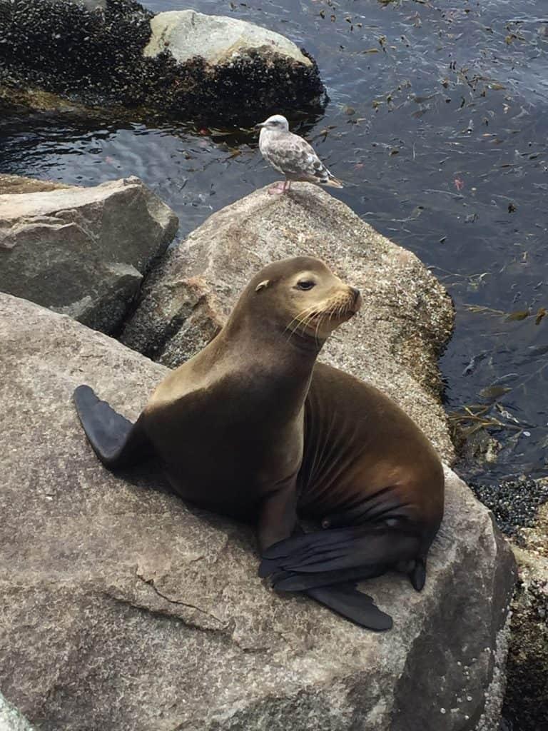 monterey bay aquarium coupons discounts and review