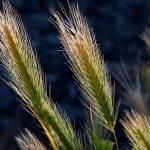 Processed Grains / Refined Grains: What are they?