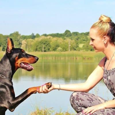 Love Dogs? Earn Money Playing with Them!