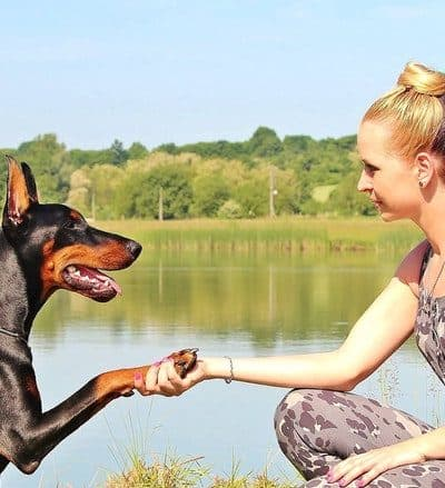 Earn Money Playing with Dogs